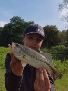 Largemouth Bass — LEBAS MAXIME