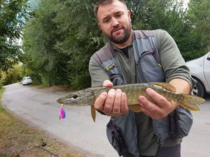 Northern Pike — Yannick Es