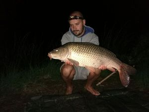 Common Carp — Maxime Hamon-gillet