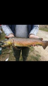 Brown Trout — Mike Thienot