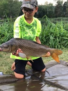 Common Carp — Fish & Fils