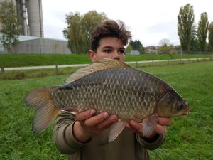 Crucian Carp — Seb fishing 54