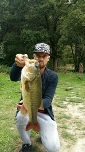 Largemouth Bass — Romain Joyas
