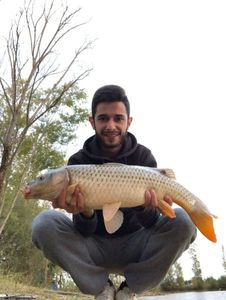 Common Carp — Lucas Aurieres