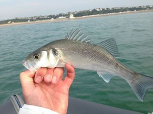 European Bass — Julien Gesnouin