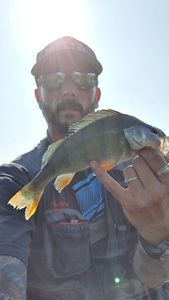 European Perch — Tid Rising