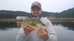 European Perch — Lucas Fishing