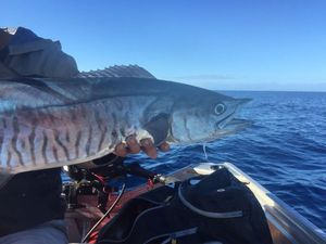 King Mackerel — Guillaume Faure