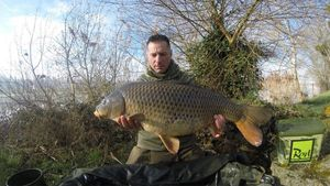 Common Carp — Franck Puget