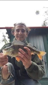 European Perch — Ladrill Biloute