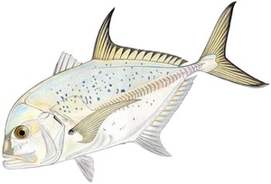 Blue Spotted Trevally