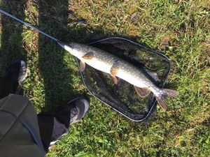 Brochet — Flox Fishing