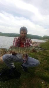 Northern Pike — Manu Matos DaSilva