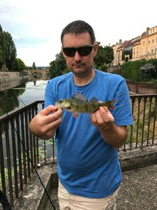 European Perch — Fabien GODFRIN