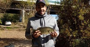 Smallmouth Bass — Vincent Moulin