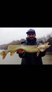 Northern Pike — Fisher Price