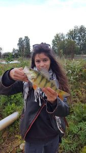 European Perch — Elodie Petit