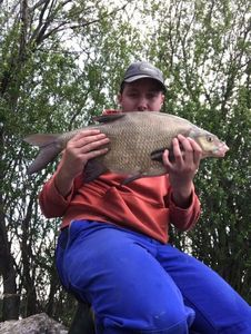 Common Bream — Lio Biolley