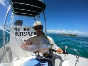 Yellowtail Snapper — Guillaume guide de pêche Guadeloupe