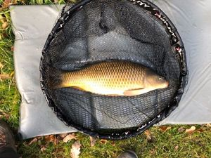 Common Carp — Nicolas Louis